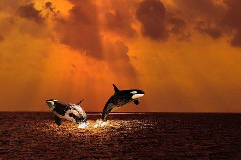La disparition programmée des orques et bien plus encore…